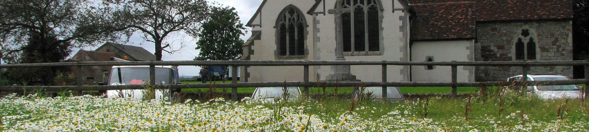 Binsted Church Ox Eye Daisies