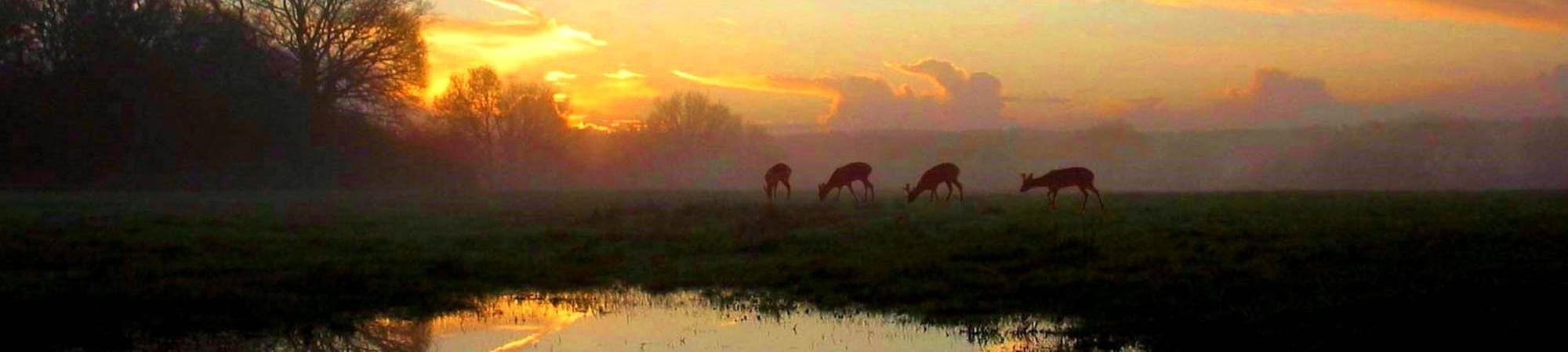 Deer Sunset Pond APF
